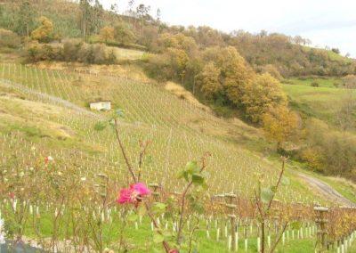 Proyecto de bodega de vino