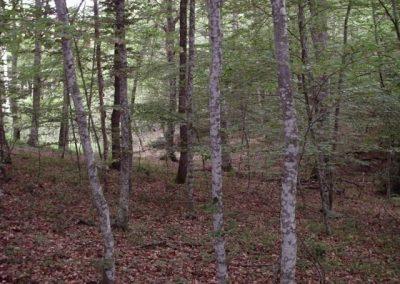 Tasación forestal